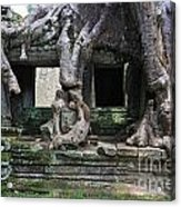 Strangler Fig Tree Roots On Preah Khan Temple Acrylic Print by Sami Sarkis