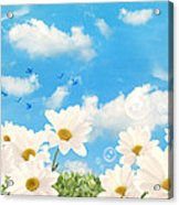 Summer Daisies Acrylic Print by Amanda And Christopher Elwell