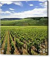 Vineyard Of Cotes De Beaune. Cote D'or. Burgundy. France. Europe Acrylic Print by Bernard Jaubert