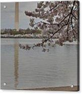 Washington Monument - Cherry Blossoms - Washington Dc - 011317 Acrylic Print by DC Photographer