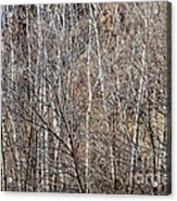 Winter Forest Acrylic Print by Elena Elisseeva