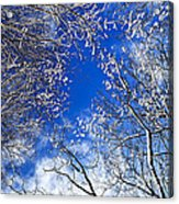 Winter Trees And Blue Sky Acrylic Print by Elena Elisseeva
