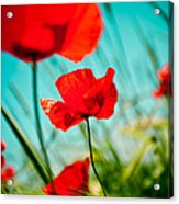 Poppy Field And Sky Acrylic Print by Raimond Klavins