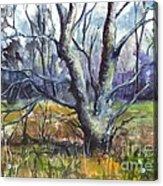 A Tree For Thee Acrylic Print by Carol Wisniewski