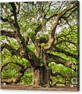 Angel Oak Tree Of Life Acrylic Print by Dustin K Ryan