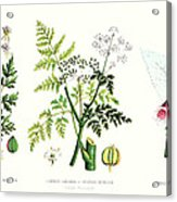 Common Poisonous Plants Acrylic Print by English School