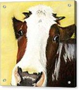 Cow No. 0650 Acrylic Print by Carol McCarty