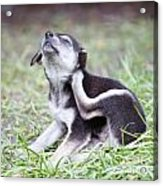 Cute Puppies Acrylic Print by Jannis Werner