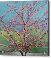 Eastern Redbud Tree Acrylic Print by Michael Creese