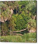 Green Cay Wetlands, Fl Acrylic Print by Mark Newman
