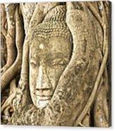 Head Of Buddha Ayutthaya Thailand Acrylic Print by Colin and Linda McKie