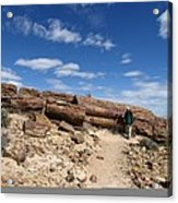 Petrified Forest, Argentina Acrylic Print by Science Photo Library