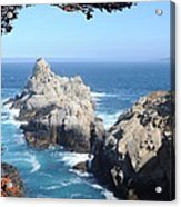 Point Lobos Number Four Acrylic Print by Catherine Lau