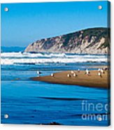 Pt Reyes National Seashore Acrylic Print by Bill Gallagher