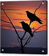2 Ravens Acrylic Print by Ron Day