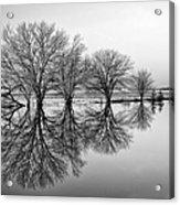 Reflection Acrylic Print by Tom Druin
