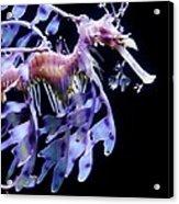 Sea Dragon Acrylic Print by Paulette Thomas