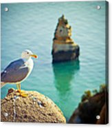 Seagull On The Rock Acrylic Print by Raimond Klavins