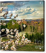 Spring Time Acrylic Print by Robert Bales