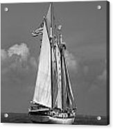 Tall Ship Harvey Gamage Acrylic Print by Skip Willits