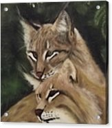 We See You Acrylic Print by Frank Loria