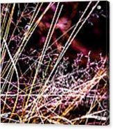 Wild Grasses Abstract Acrylic Print by Natalie Kinnear