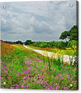 Wildflower Wonderland Acrylic Print by Lynn Bauer