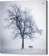 Winter Tree In Fog Acrylic Print by Elena Elisseeva
