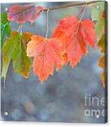 Autumn Leaves Acrylic Print by Mariusz Blach