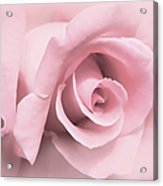 Blushing Pink Rose Flower Acrylic Print by Jennie Marie Schell
