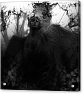 Close Behind Acrylic Print by David Fox