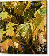 Green Tree Acrylic Print by ELITE IMAGE photography By Chad McDermott