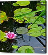 Lilly Pads Acrylic Print by Frozen in Time Fine Art Photography
