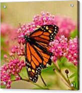 Monarch Butterfly Acrylic Print by Carol Toepke