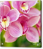 Orchids Acrylic Print by Carlos Caetano
