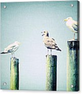 3 Seal Gulls Acrylic Print by Dick Wood