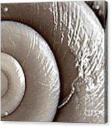 Seashell Detail Acrylic Print by Elena Elisseeva