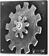 Watch Gear, Sem Acrylic Print by David M. Phillips