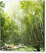 Waterfall In Rainforest Acrylic Print by Atiketta Sangasaeng
