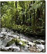 Jungle Stream Acrylic Print by Les Cunliffe
