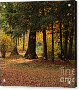 Autumn Acrylic Print by Angela Doelling AD DESIGN Photo and PhotoArt
