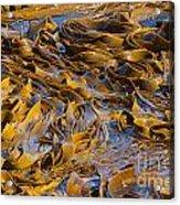 Bull Kelp Blades On Surface Background Texture Acrylic Print by Stephan Pietzko