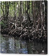 Mangrove Forest In Los Haitises National Park Dominican Republic Acrylic Print by Andrei Filippov