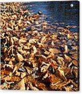 Ussurian Taiga Autumn Acrylic Print by Anonymous