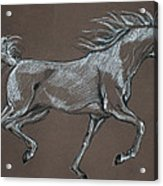 Arabian Horse  Acrylic Print by Angel  Tarantella