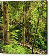 Path In Temperate Rainforest Acrylic Print by Elena Elisseeva