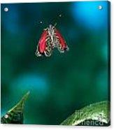 89 Butterfly In Flight Acrylic Print by Stephen Dalton