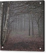 A Chill In The Trees Acrylic Print by Odd Jeppesen