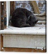 A Circled Up Cat  Acrylic Print by Lainie Wrightson
