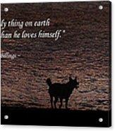 A Dog Acrylic Print by Olahs Photography